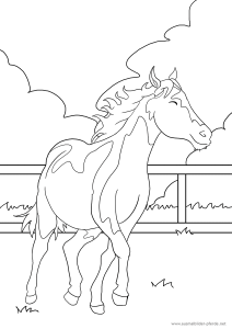 Das vierte Pferd-Ausmalbild - wie immer kostenlos ...