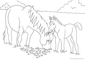 als siebtes ausmalbild mit pferden ein pferd mit fohlen | ausmalbilder pferde - viele