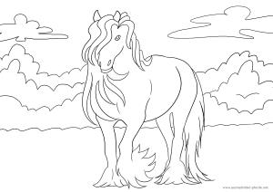 ausmalbilder pferde   ♥ foto ♥ car ♥ templates ♥ fotos ♥