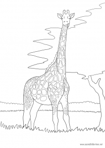 Ausmalbild Tier: Giraffe
