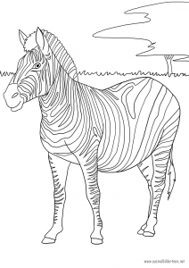 Ein Zebra zum Ausmalen