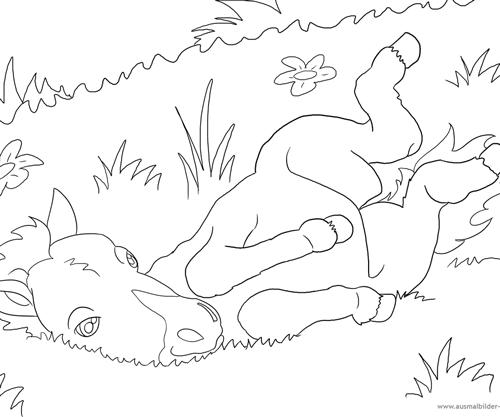 Ausmalbild Nr. 6 ein Fohlen