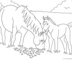 Ausmalbild nr. 7: Pferd mit Fohlen