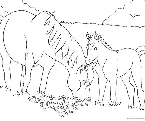 pferdebilder online ausmalen  ausmalbilder pferde  viele