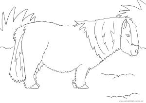 Ausmalbild mit Pony | Ausmalbilder Pferde   viele Malvorlagen mit