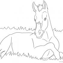Fohlen Ausmalbilder Pferde Viele Malvorlagen Mit Pferden