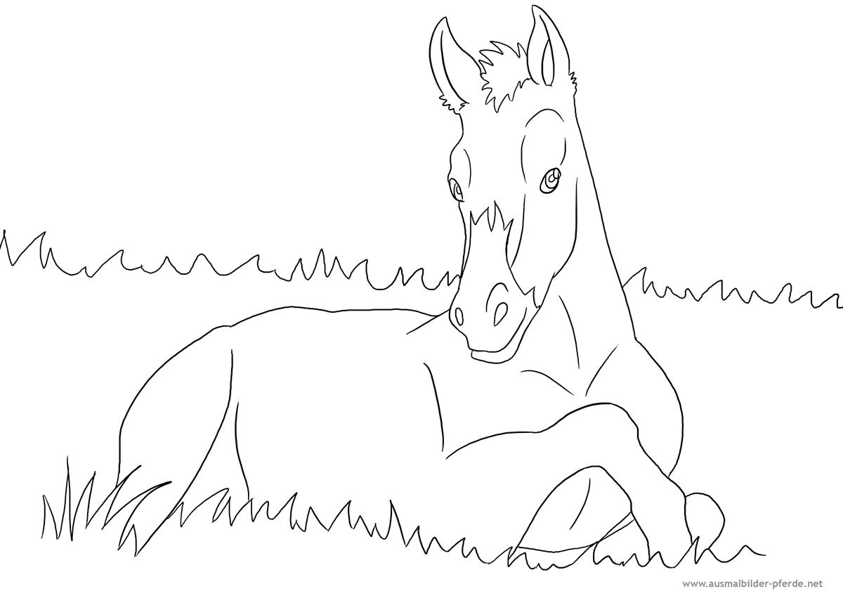 Ausmalbild mit Pferd - Fohlen  Ausmalbilder Pferde - viele