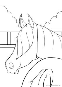 Ausmalbild Pferd Nr. 17