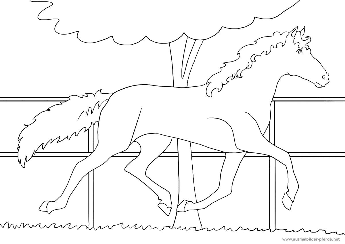 Ausmalbilder Pferd Pony : Ausmalbilder Pferde Nr 19 Ausmalbilder Pferde Viele Malvorlagen