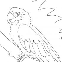 Papagei Ausmalbild