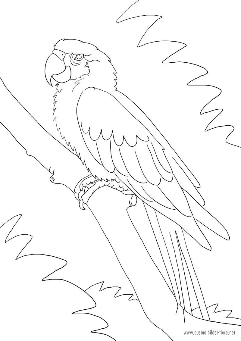 Papagei / Ara zum Ausmalen