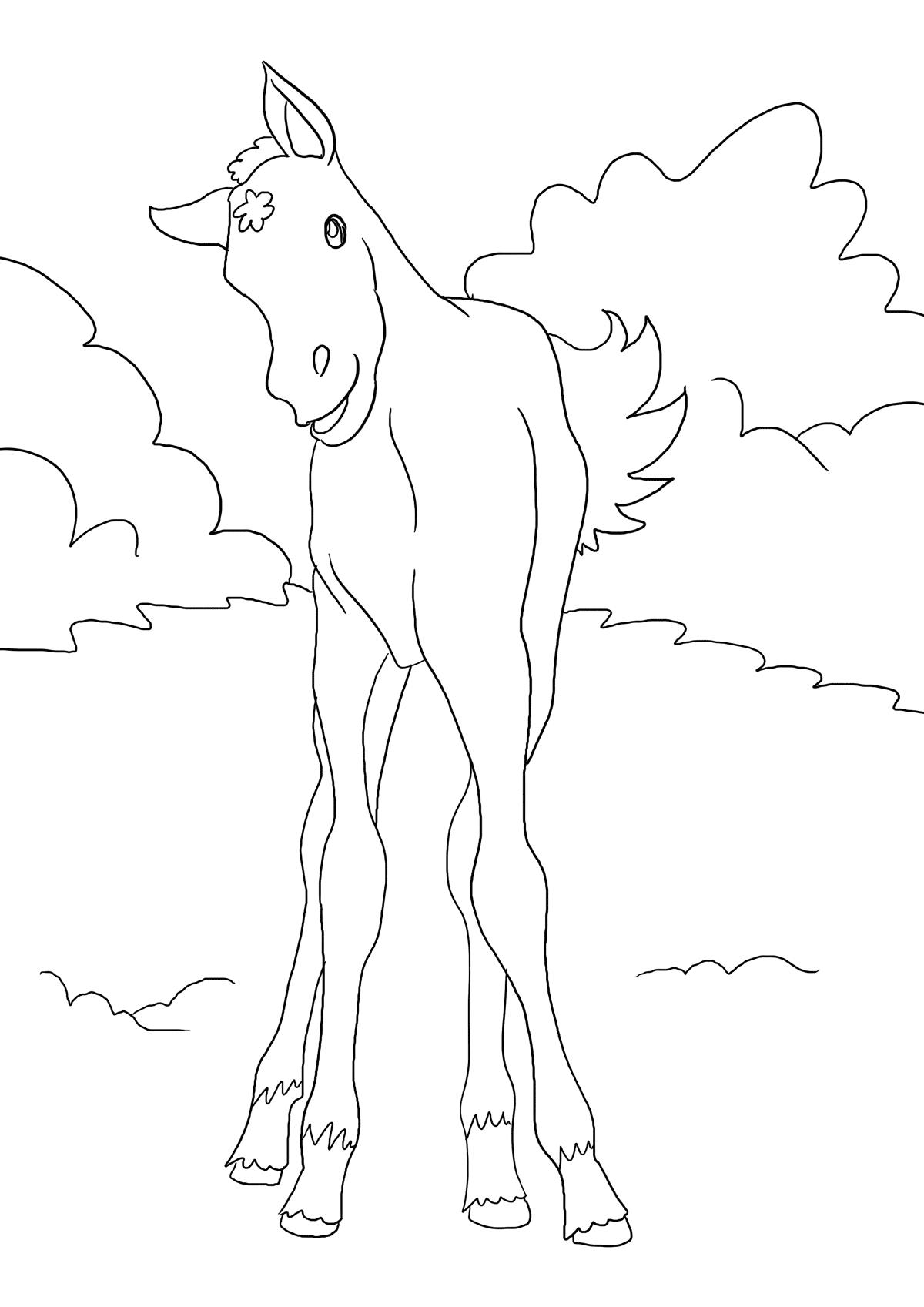 Ausmalbild Fohlen