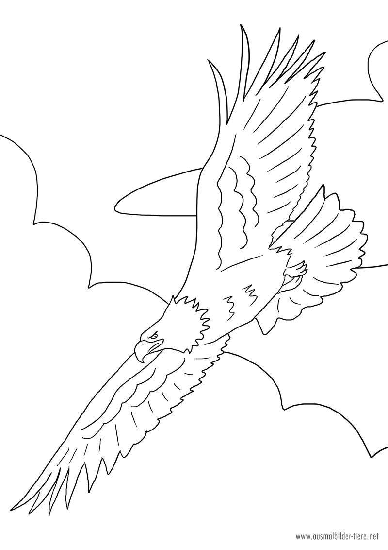 Adler zum ausmalen ausmalbilder pferde viele malvorlagen mit pferden adler zum ausmalen thecheapjerseys Images
