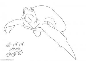 Schildkröte zum Ausmalen