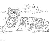 Tiger Als Malvorlage Ausmalbilder Pferde Viele Malvorlagen Mit